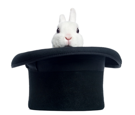 184418345_Mini_rex_rabbit_appearing_from_a_top_hat_isolated